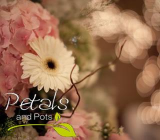 Petals and Pots